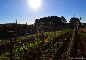 agricultura peonadas